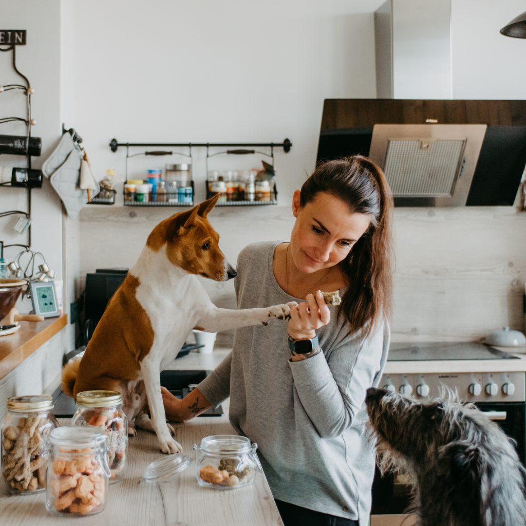 Käsestangen für Hunde