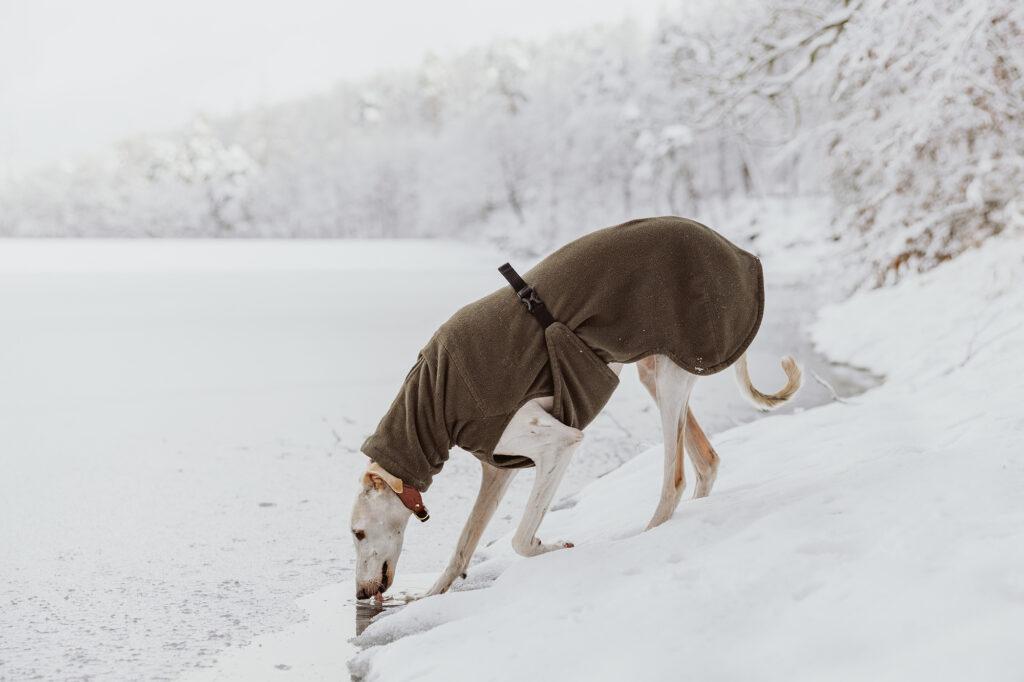 Winterspaziergang am Kunstteich
